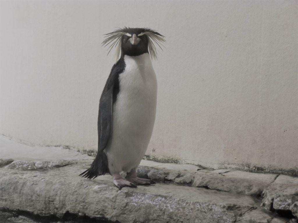 Vom Gruppenkuscheln und  kalten Füßen - ein Pinguin müsste man sein