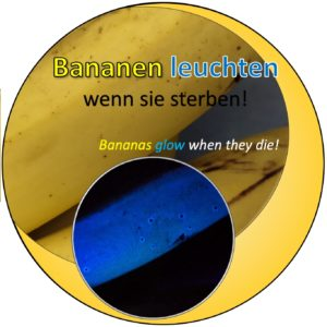 Leuchtende Bananen